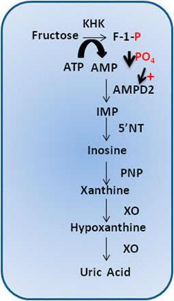 insuliiniresistenssi_9